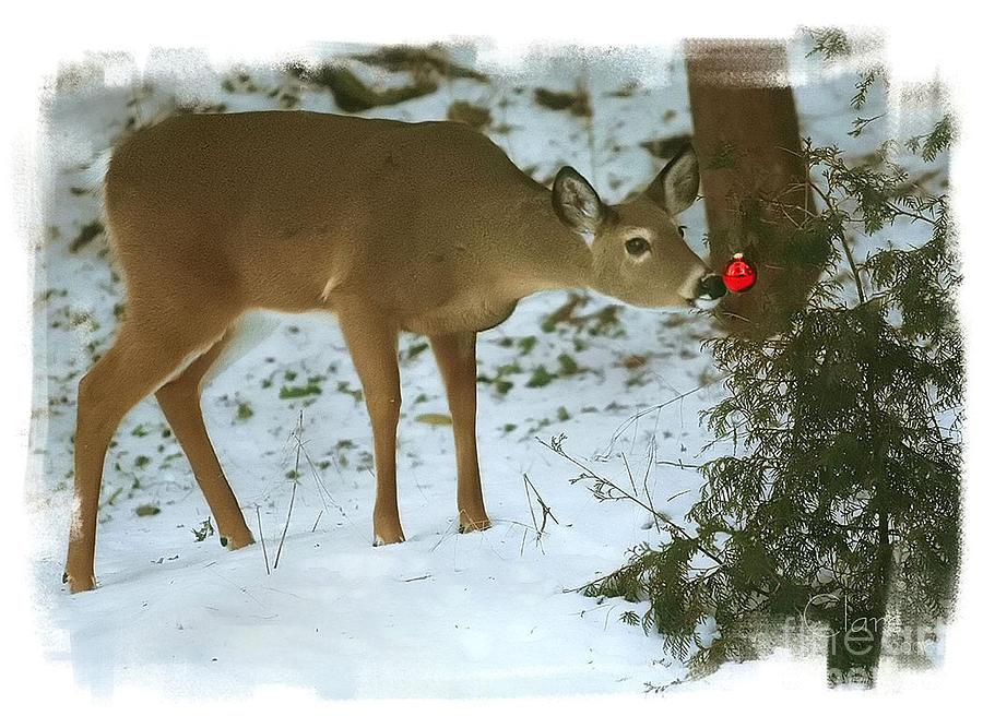 christmas-doe-clare-vanderveen